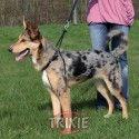 Trixie Arnes-entrenamiento easy walk basic m,33-47cm, 25m