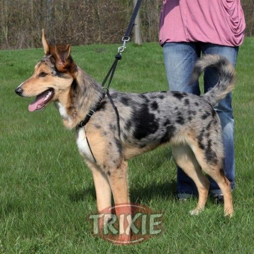 Trixie Arnes-entrenamiento easy walk basic xl,55-80cm, 25m