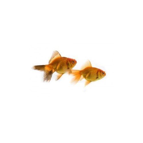 Peces - Comprar acuarios, comida, accesorios. Mascotas y Accesorios