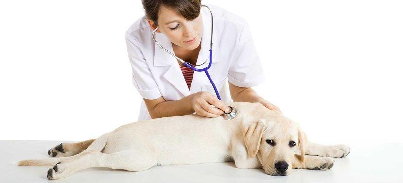 visitas-al-veterinario.jpg